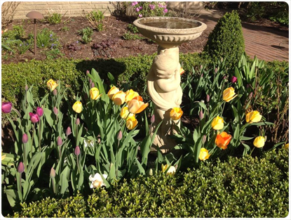 Birdbath with Tulips Landscape Installation